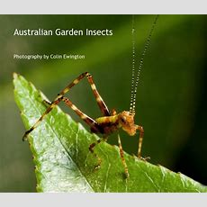 Australian Garden Insects Ebook By Photography By Colin