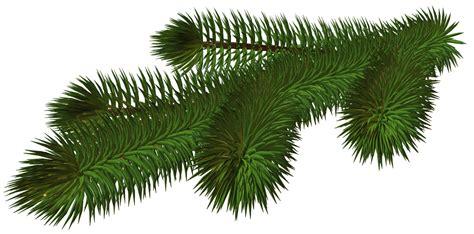 Transparent Pine Branch 3d Png Picture