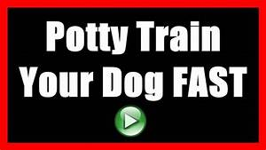 How to potty train a dog to not poop indoors house train for How to train your dog to pee