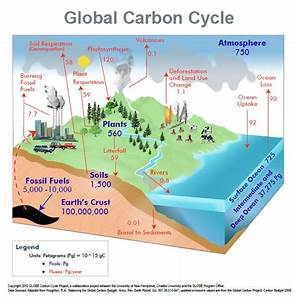 17 Best Images About Carbon Cycle On Pinterest
