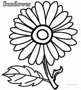 Sunflower Coloring Pages Olds sketch template