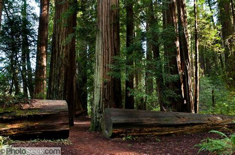 Pin On Jedediah Smith Redwoods State Park And Redwoods