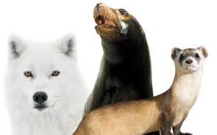Arctic Endangered Species