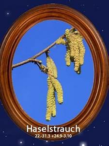 Baumhoroskop Berechnen : das gro e baum horoskophaselstrauch 22 bis 31 3 24 9 ~ Themetempest.com Abrechnung