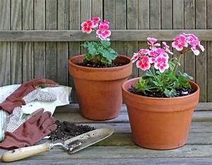 Wann Geranien Pflanzen : geranien wann ist die beste pflanzzeit ~ Lizthompson.info Haus und Dekorationen