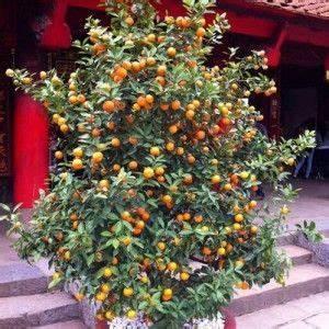 Tailler Un Citronnier : agr able tailler un citronnier en pot 4 les 25 ~ Melissatoandfro.com Idées de Décoration