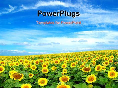 powerpoint template  sunflower farm  clouds