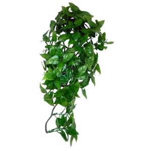 hanging vine plants komodo philodendron hanging plant komodo from lots for pets uk