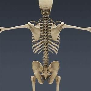 3 human skeleton 3d in Skeleton - Biological Science ...