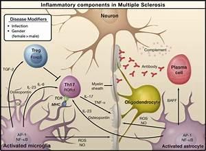 Mechanisms Underlying Inflammation In Neurodegeneration  Cell