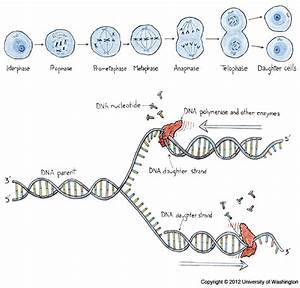 How Does Dna Change