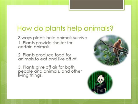 how do animals help what do plants look like ppt video online download