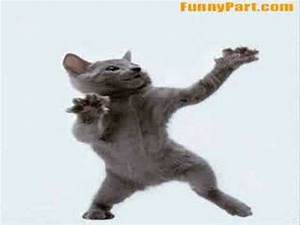 Crazy Dancing Cat YouTube