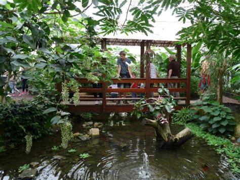bureau de change nancy jardin des papillons papillons exotiques 28 images
