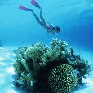 Dive Marshall Islands Photo Image 11