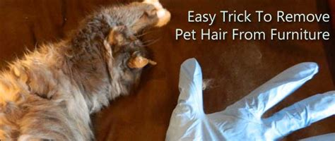 How To Remove Pet Hair From Couch Finder Tips