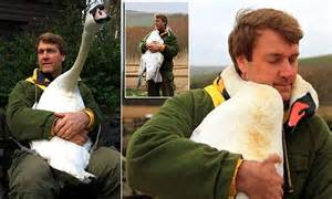 Injured swan 'hugs' Richard Wiese who saved her life in ...