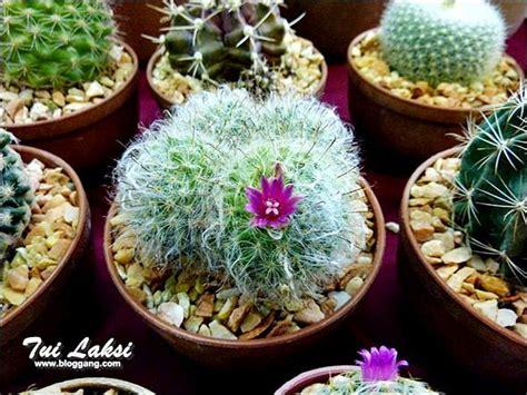 การดูแลแคคตัส (cactus)