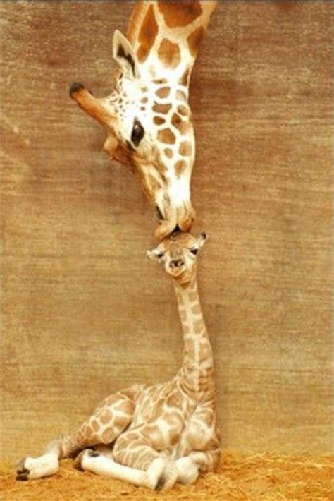 baby animals   parents   cuter cuteness