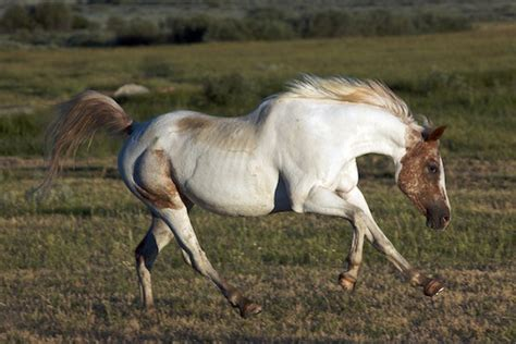 horse looking direction athletic