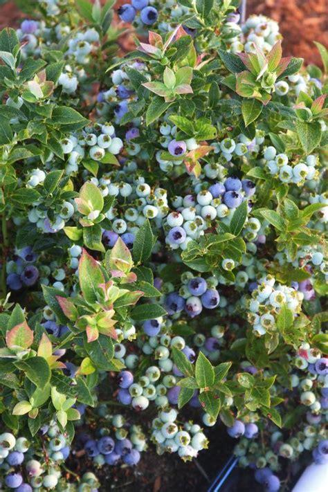 Multiseason Plants For Northeast Gardens Hgtv