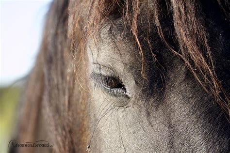 Liebes Pferd Kaufen