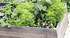 Befüllung Von Hochbeeten : gem se in kisten ziehen was beim hochbeetbau zu beachten ~ Lizthompson.info Haus und Dekorationen
