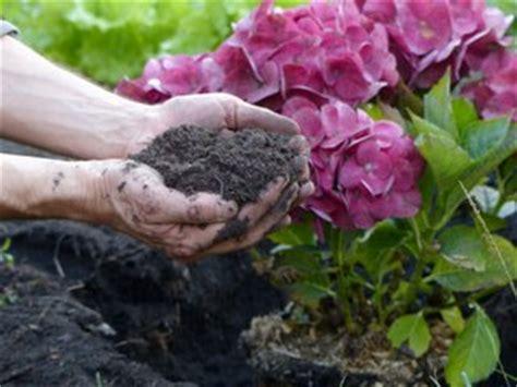 feuilles compost sol hortensias tout