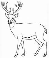 Deer Coloring Pages Leisure Enjoyable Totally Activity Print Forget Supplies Don sketch template