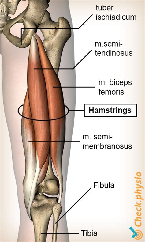 Hamstrings trainen