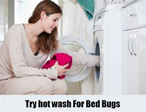 12 herbal remedies for bed bugs how to cure bed bugs With does washing bedding kill bed bugs