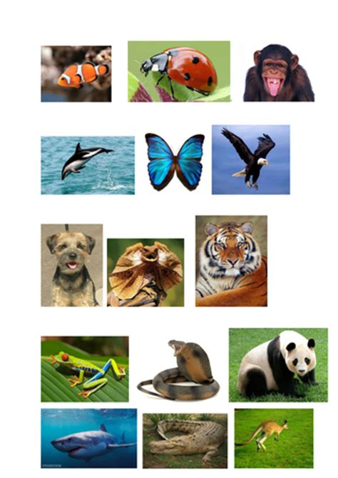 classifying animals worksheet  pictures teaching