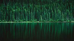 green pine tree forest 5k wallpapers hd wallpapers id