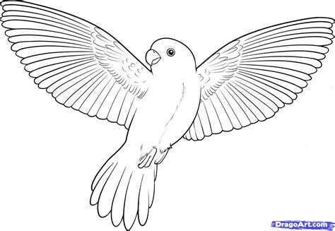 bird pictures to color bird coloring pages how to draw a flying bird how to