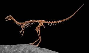 Compsognathus - Wikipedia
