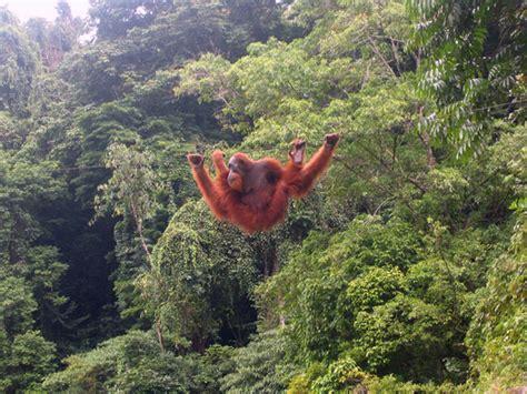 tempat tempat keren hunting foto satwa liar indonesia