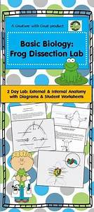 Teachers Guide To Frog Dissection