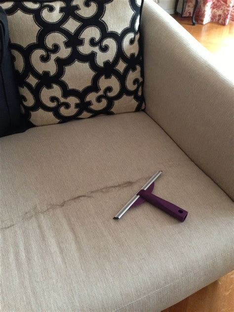how to remove dog hair from sofa pin by jen delgado on genius ideas pinterest