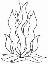 Seaweed Coloring Pages Printable Getcolorings Getdrawings Pag sketch template