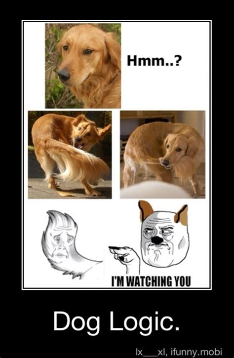 Dog Logic Meme - 17 best images about photos gone wrong on pinterest funny underwater dogs and drunk people
