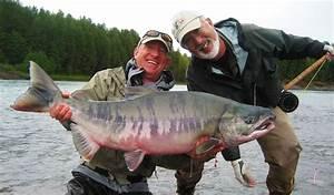 Skeena River Chinook Salmon and Chum Salmon (Canada)