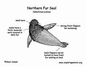 Double Seal Diagram