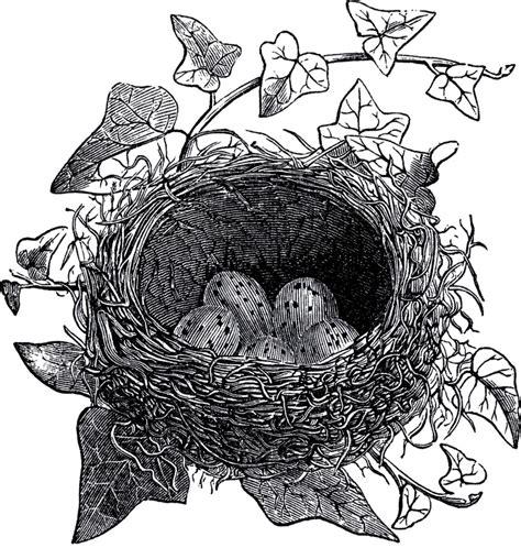 graphics clipart antique bird nest illustration the graphics