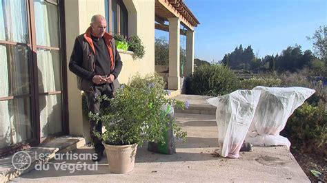 comment prot 233 ger palmier citronnier oranger mimosa plumbago bougainvillier du gel et du