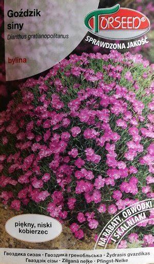 Zilganā neļķe 0.1 g Torseed - Divgadīgās un daudzgadīgās puķes - Sēklu tirdzniecība internetā