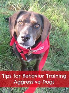 june 2014 With dog training for aggressive dogs