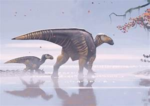 1613 best images about Prehistoric Life on Pinterest