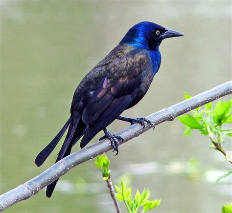 blue head bird tight crop serpentflame156 flickr