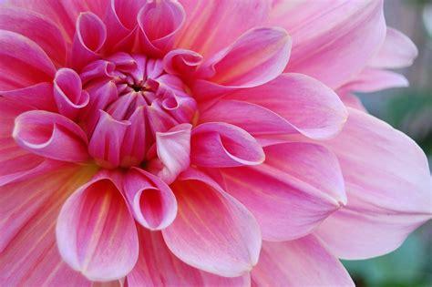 Flower Pink Nature · Free Photo On Pixabay