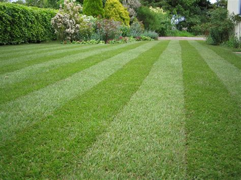 grass lawns how to care for your lawn turf gardening blog bury hill blog